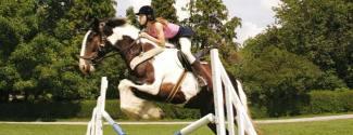 Cours d'Anglais et Equitation