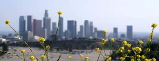 Immersion chez le professeur aux Etats-Unis Los Angeles